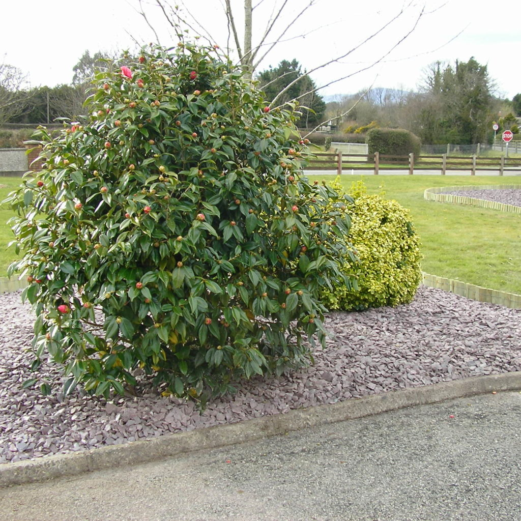 Plum Slate Mulch 20mm